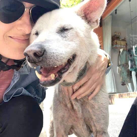 Suro - a rescued dog by Mission Pawsible - Dog Rescue, Rehome, & Adoption in Bali.